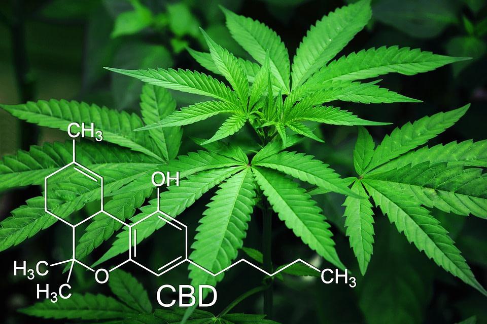 RT Cannabis